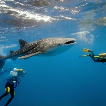 HOSPITALITY GROUPS JOIN SHARK CONSERVATION