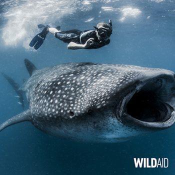 SHARK SAVERS JOINS WILDAID